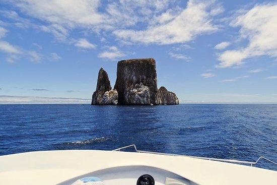 Galapagos Hopper Kicker Rock
