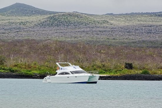 Galapagos Hopper Española
