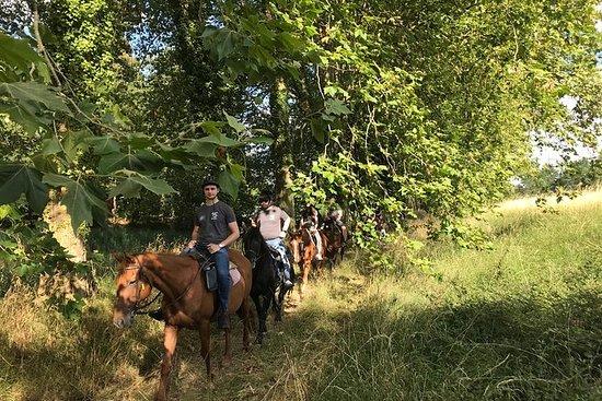 马和小马骑