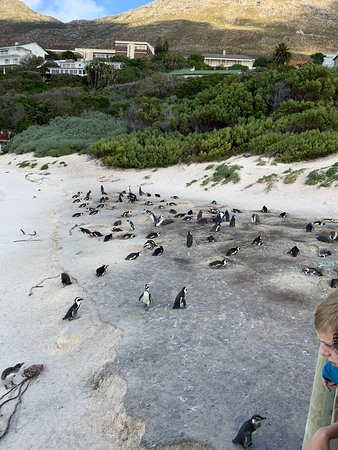 This is at  Boulder Beach in Cape Town South Africa