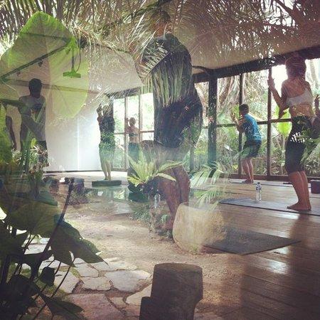 Yoga in the Tropics