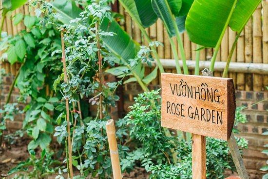 Nan House: Garden