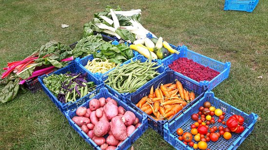 Kentwell Hall: Garden veg straight to the tea rooms - seasonal