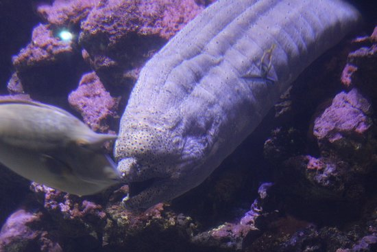 Skip the Line: Palma Aquarium Entrance Ticket Φωτογραφία