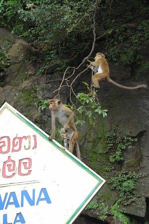 Τανγκάλε, Σρι Λάνκα: Cartoline da Tangalle, Sri Lanka