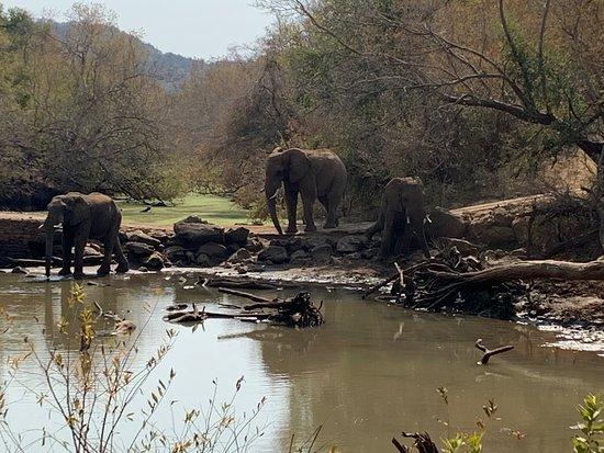 Madikwe Game Reserve-billede