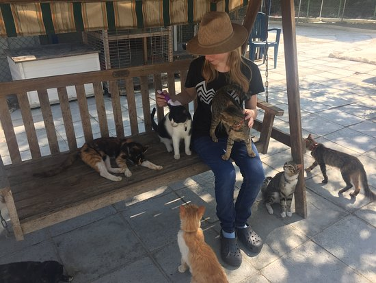 Feline love at Malcolm Cat Sanctuary