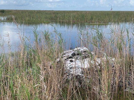 Deerfield Beach Airboat Rides: Plane crash
