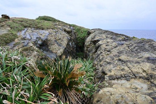 岩の割れ目です
