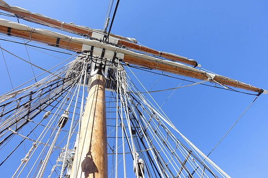 Sydney Harbour Tall Ship Lunch Cruise: Not brave enough to climb up.