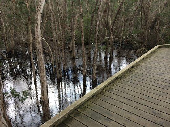 Tee Tree Amid The Wetlands