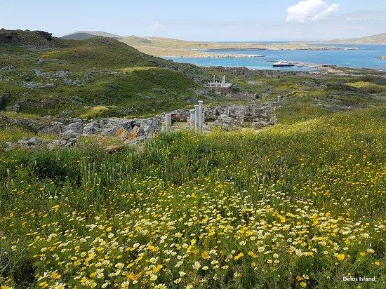 Delos Tour: Blooming yellow daisies, curse of Delos