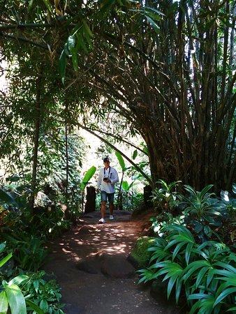 Тропа к водопаду Tibumana, бамбуковые заросли