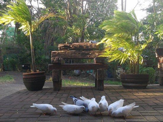 bird feeding at 5pm