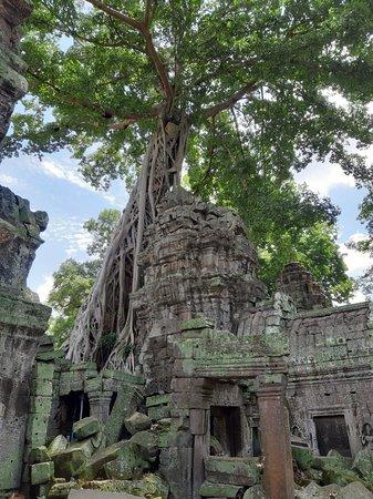 Angkor Wat Tuk Tuk Driver (Siem Reap) - Updated 2019 - All