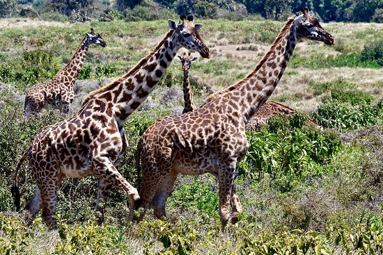 Greg Adventures: Cratere Ngorongoro