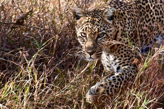 Greg Adventures: Serengeti
