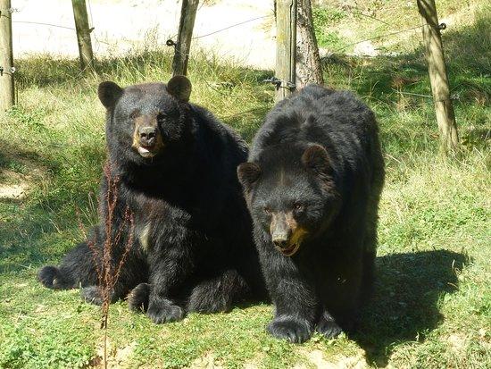 Arnay-sous-Vitteaux, France : les ours bruns