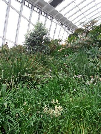 Sky Garden: lush planting