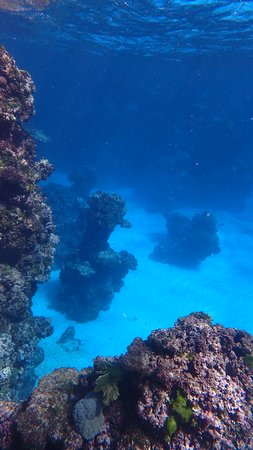 During snorkeling with Neutomo