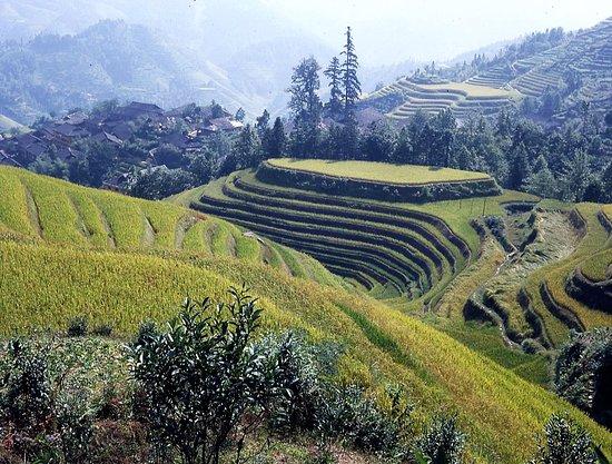 Long Sheng's Dragon Spine Rice Terraces: Umfeld von Da Zai (1)