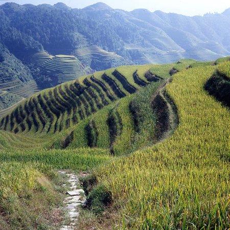 Long Sheng's Dragon Spine Rice Terraces: Umfeld von Da Zai (2)