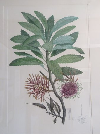 Captain Cook Memorial Museum Whitby: Lots of interesting material on the botany aspects of the voyages