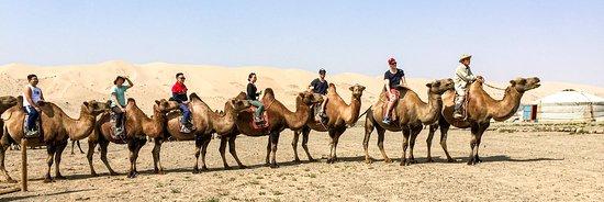 Mongolian Tour Guide: Camel trial