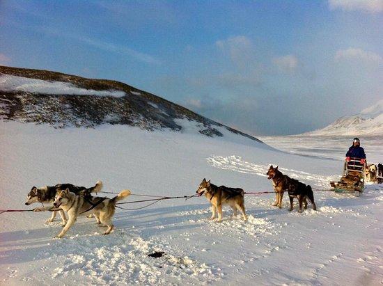Svalbard, Noruega: Huskies are waiting you for sledding