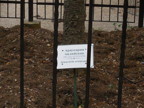 Табличка к дереву