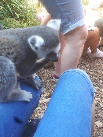 Meeting the lemurs