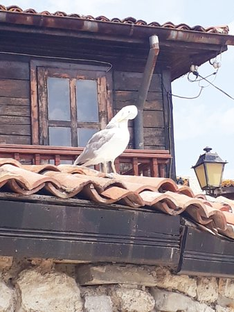 Old Nessebar: seagull on an old roof