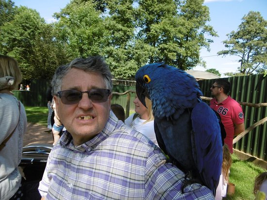 Neville the Hyacinth Macaw. Likes having his head scratched.