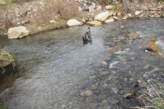 Turismo Migrantes: Perrito aperrado cruzando el río Cochiguaz