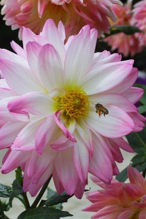 Hoa trong khuôn viên thiền viện
