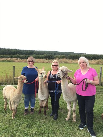 Bowbridge Alpacas Scotland