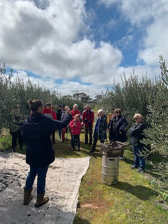 We love sharing our passion for agriculture and extra virgin olive oil with our visitors!