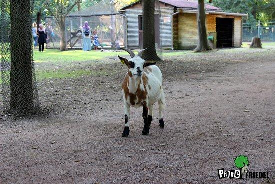 Illkirch-Graffenstaden, France: Les animaux du Parc Friedel.