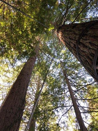Quest Rotorua Central: Treetops walk Rotorua