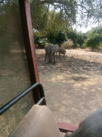 On a game drive