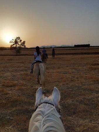 Cossu Quarter Horses