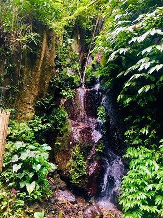Nandini Jungle Resort & Spa Bali: View from yoga platform