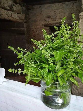 Gioi, Italie : Angoli profumati, ogni giorno utilizziamo el erbe aromatiche del nostro orto