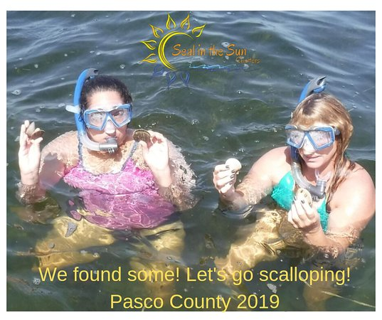 Pasco county scallop season is here!