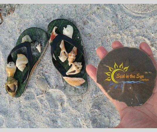 Shells, shells and more shells