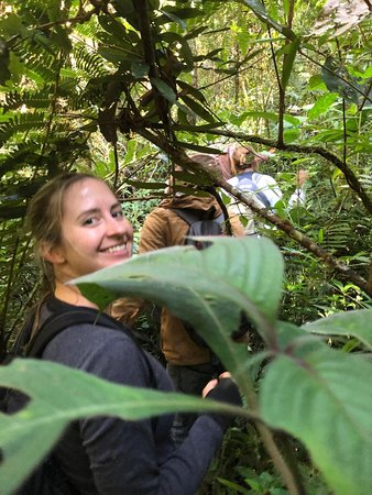 Madarako Tours: rain forest walk - going off the trail to spot wild lemurs!