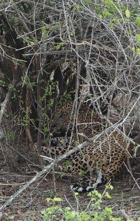 Yala National Park صورة فوتوغرافية