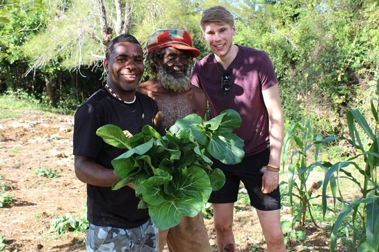 Saint James Parish, Jamaica: Farmers In Action.