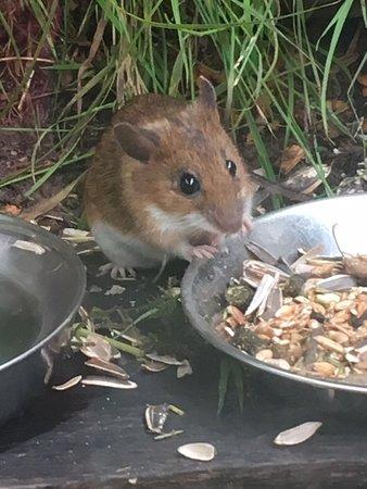 British Wildlife Centre: So cute.