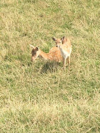British Wildlife Centre: Deer